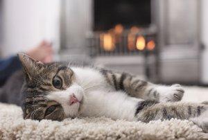 Un tapis pour chat moelleux