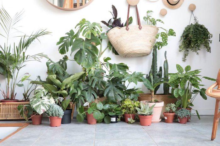 Opter pour les plantes qui n'ont pas besoin d'eau et faible entretien