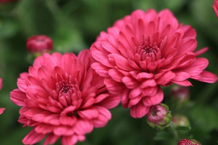jardin fleuri en automne